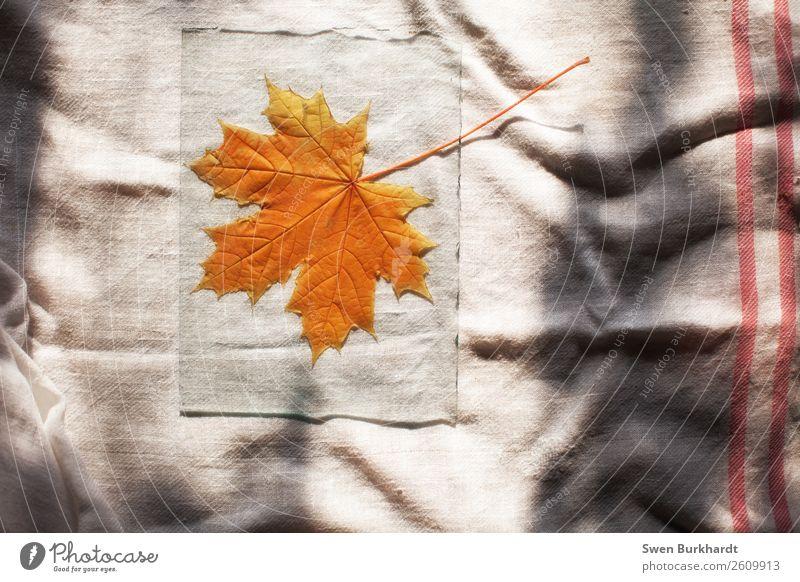 Das letzte Ahornblatt Natur Pflanze rot Blatt gelb Herbst Umwelt natürlich Garten orange Häusliches Leben wild Dekoration & Verzierung liegen Glas Umweltschutz