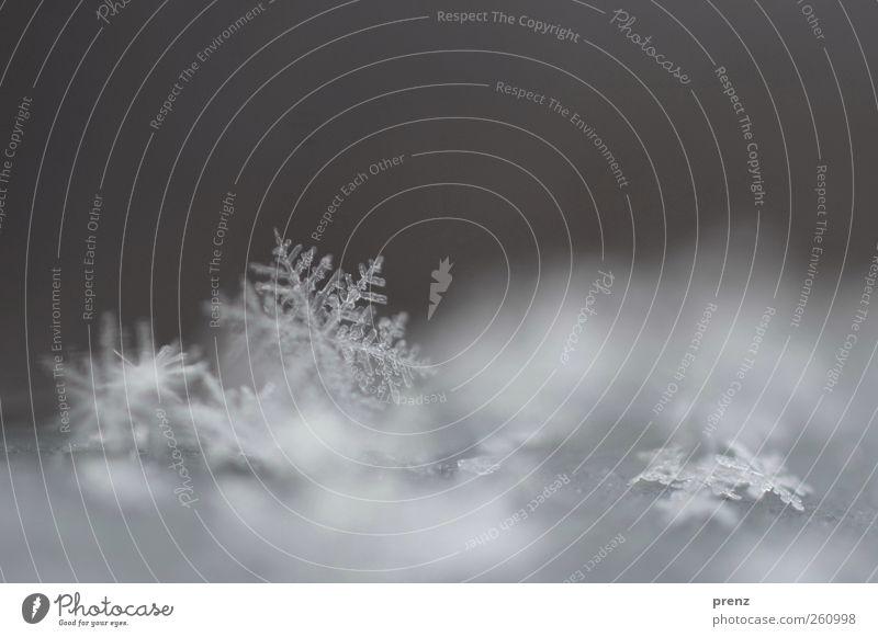 leise rieselt er Natur weiß Winter Umwelt kalt Schnee grau Wetter Eis liegen Stern (Symbol) Frost Schneeflocke Eiskristall