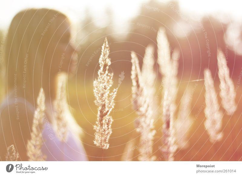 Mensch Natur Jugendliche schön Pflanze Sonne Erwachsene gelb Herbst feminin Gefühle Gras Kopf Haare & Frisuren Park blond