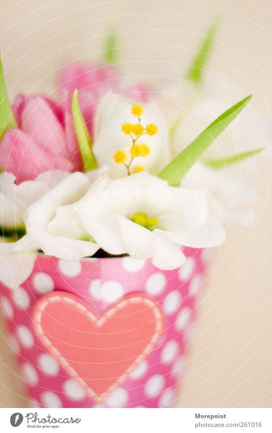 schön Pflanze Blume Blüte Dekoration & Verzierung Papier Inspiration