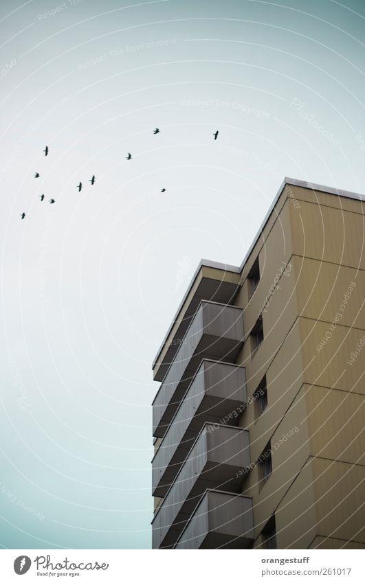 Vogelhaus Tier Haus Architektur Gebäude braun Vogel gold Wohnung fliegen Beton Hochhaus Häusliches Leben Tiergruppe Bauwerk Sehnsucht Balkon