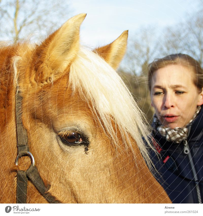 Na du? [MINI-UT INNTAL 2012] Mensch Frau weiß Tier Gesicht Erwachsene Kopf Freundschaft braun gold Pferd Kommunizieren berühren Freundlichkeit Vertrauen positiv