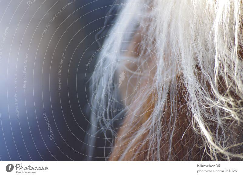 [MINI-UT INNTAL 2012] Pferdchen schön Freude Tier Liebe Wärme Glück springen träumen braun blond natürlich Freizeit & Hobby elegant beobachten Pferd weich