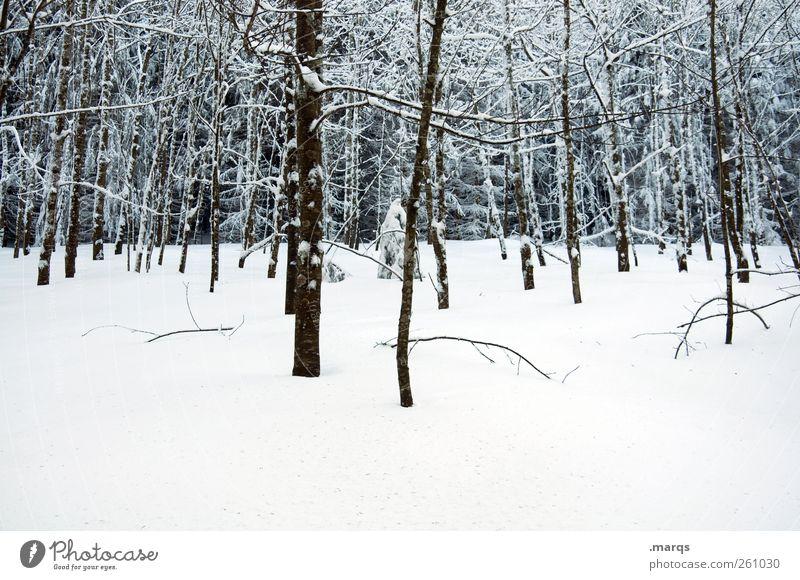 Schwarzwald Winterurlaub Natur Landschaft Klimawandel Eis Frost Schnee Baum Wald kalt Stimmung Baumstamm Schneedecke Farbfoto Außenaufnahme Menschenleer