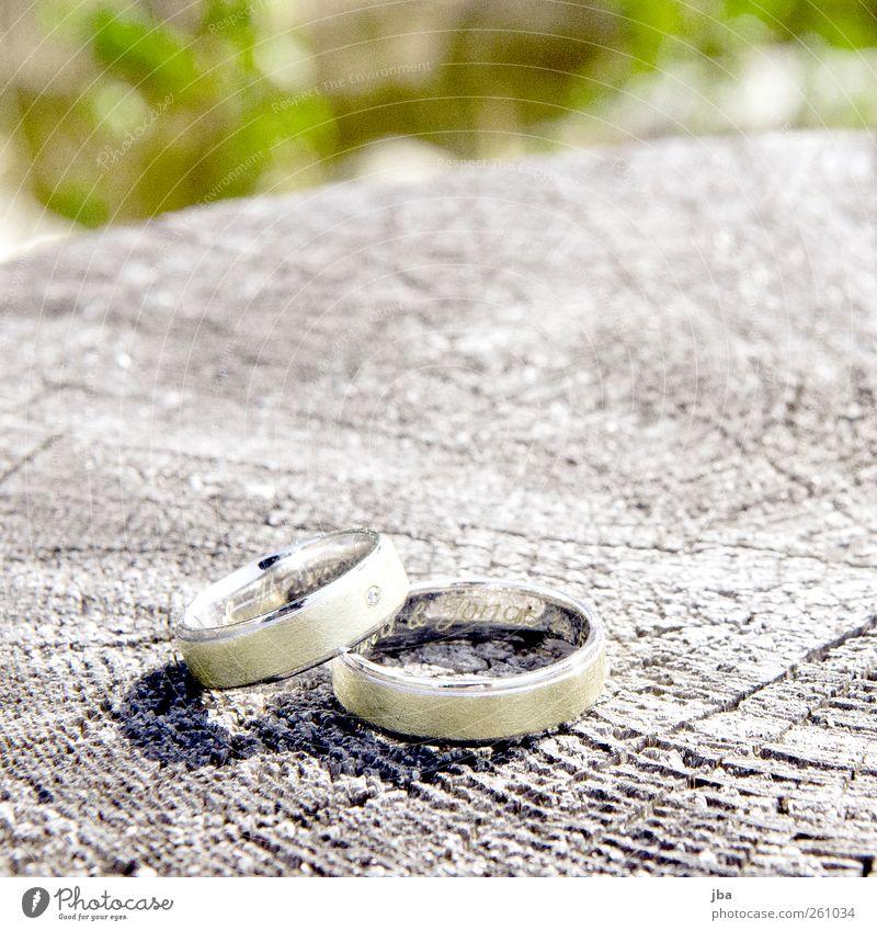 Ringe Leben Kunst Natur Sommer Baum Baumstamm jahrringe Schmuck Ehering Statussymbol Diamantring Gravur Jonas Name Metall Gold Zeichen liegen Kostbarkeit