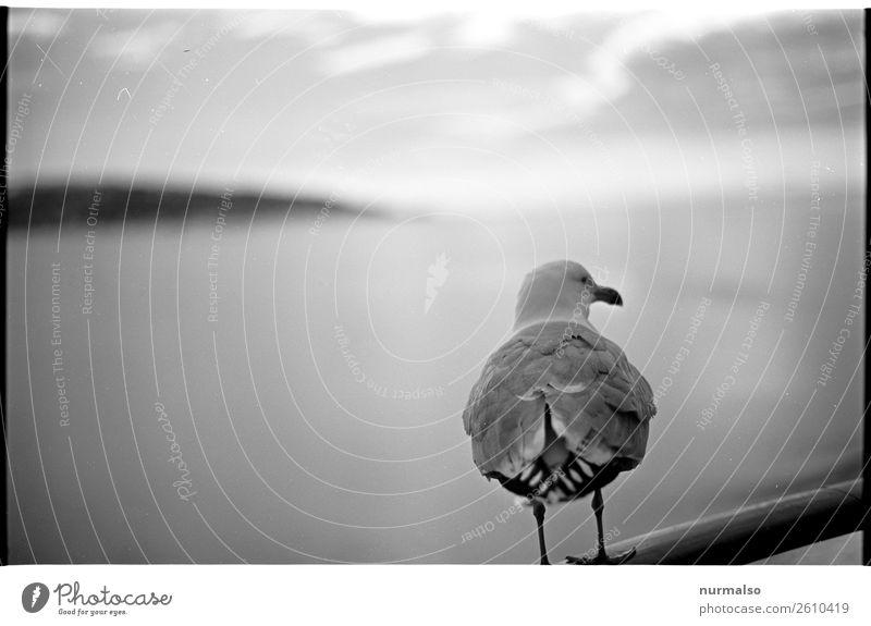 Einsamkeit Tier Winter Lebensmittel Lifestyle Kunst Schwimmen & Baden Vogel Häusliches Leben Freizeit & Hobby Nebel ästhetisch Fliege Beginn kaufen Flügel