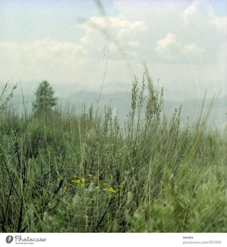 weites Land Wolken Einsamkeit ruhig Ferne gelb Landschaft Berge u. Gebirge Gras Blüte wild Sträucher Hügel Sehnsucht zart Schönes Wetter Aussicht