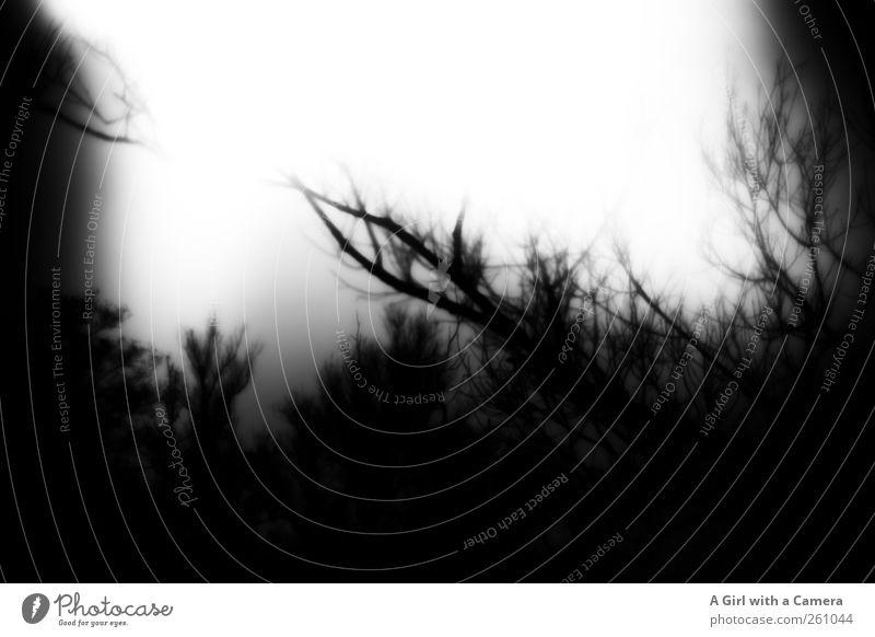 Scherenschnitt Welt Umwelt Natur Landschaft Pflanze Urelemente Winter Baum Gras Sträucher Feld Wald ästhetisch außergewöhnlich dunkel gruselig natürlich