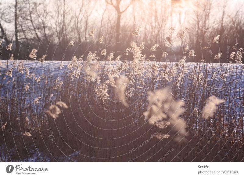 Februarlicht Natur Pflanze Winter ruhig Landschaft Umwelt kalt Schnee Stimmung Eis Wetter Urelemente Frost Romantik Jahreszeiten Wachsamkeit