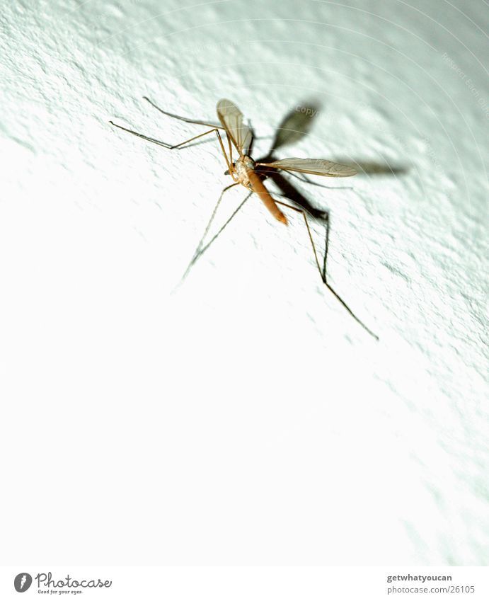 Zwielichtiges Getier weiß Wand Raum klein sitzen nah Flügel Tapete Ekel hässlich