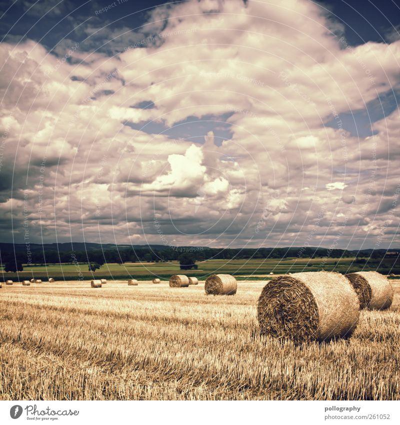 golden fields Umwelt Natur Landschaft Himmel Wolken Gewitterwolken Horizont Sommer Herbst Klima Wetter Schönes Wetter Dürre Baum Grünpflanze Nutzpflanze Stroh