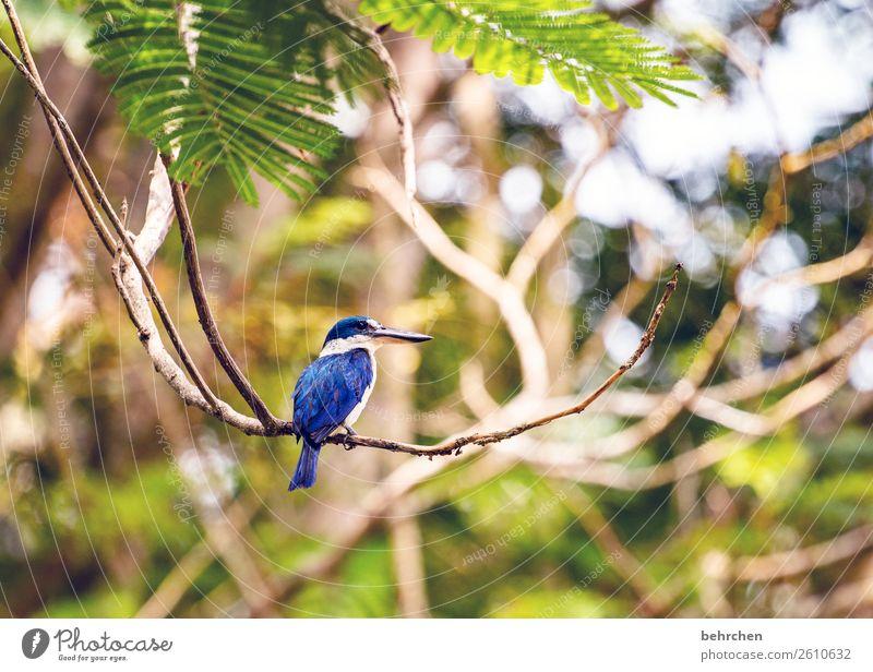 astschaukel Ferien & Urlaub & Reisen Tourismus Ausflug Abenteuer Ferne Freiheit Natur Landschaft Pflanze Tier Baum Blatt Ast Urwald Flussufer Wildtier Vogel