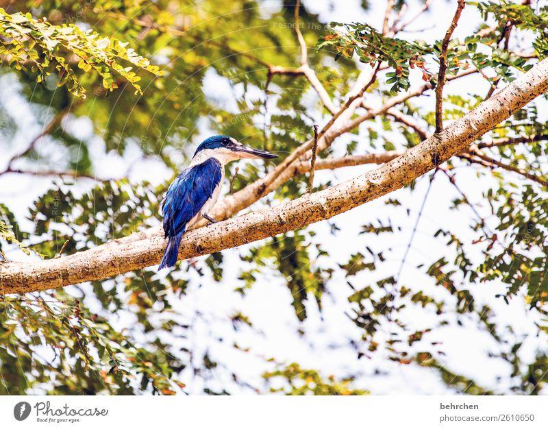 the king Ferien & Urlaub & Reisen blau schön Baum Tier Blatt Ferne klein Tourismus außergewöhnlich Freiheit Vogel Ausflug Wildtier Abenteuer Feder