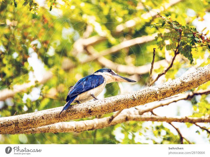 der frühe vogel Ferien & Urlaub & Reisen Tourismus Ausflug Abenteuer Ferne Freiheit Natur Baum Blatt Tier Vogel Flügel Eisvögel kighfisher Feder 1