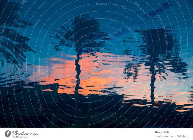 Palmen spiegeln sich im Pool bei Sonnenuntergang Schwimmbad Schwimmen & Baden Ferien & Urlaub & Reisen Tourismus Sommer Sommerurlaub Wasser Erholung blau orange