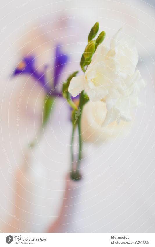 Pflanze schön Blume Gefühle Frühling frisch authentisch niedlich weich Licht