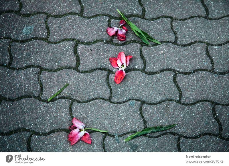 Der vergeigte Valentin.... Reichtum Feste & Feiern Valentinstag Blume Tulpe Zeichen Traurigkeit verblüht kaputt Wut Liebeskummer Enttäuschung Unglaube verstört