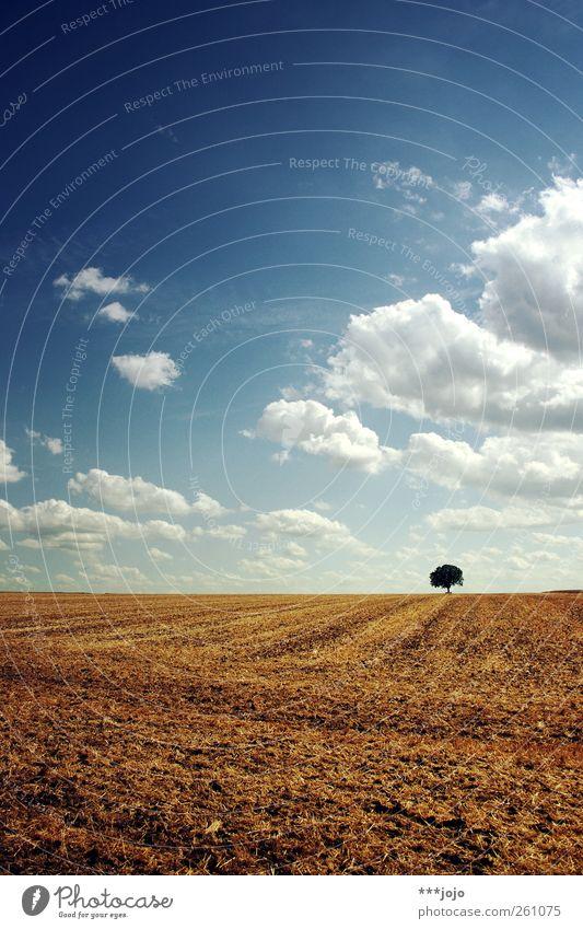 sommer. Himmel Natur blau Baum Sommer ruhig Landschaft Wärme braun Horizont Erde Feld natürlich Klima Wachstum Hügel