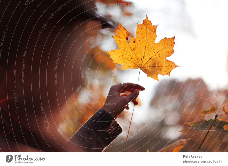 #A# Herbst-Gold Natur Schönes Wetter ästhetisch Blatt Laubwald herbstlich Herbstlaub Herbstfärbung Herbstbeginn Herbstwald Herbstwetter Herbstwind Außenaufnahme