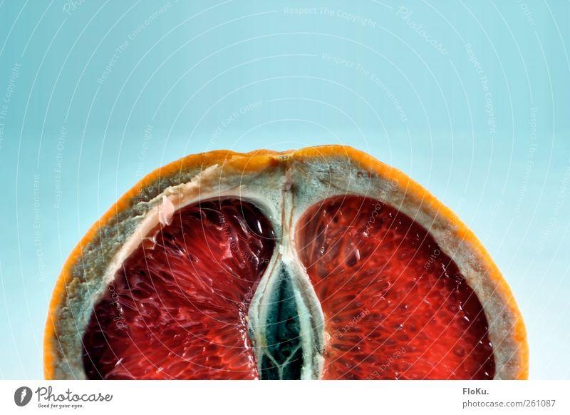 Huch blau rot Frucht Lebensmittel Ernährung Teilung Bioprodukte Hülle Vegetarische Ernährung Fruchtfleisch aufgeschnitten Zitrusfrüchte Südfrüchte Grapefruit