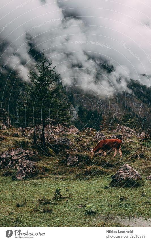 Kuhl Ferien & Urlaub & Reisen Ausflug Sommer Berge u. Gebirge wandern Natur Landschaft Wolken Herbst Baum Gras Sträucher Moos Grünpflanze Felsen Alpen Tier