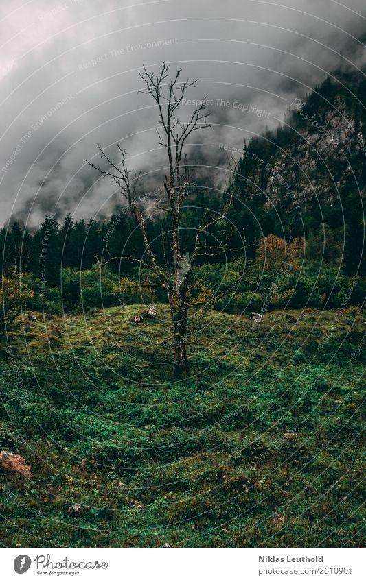 Einsamer Tod Ferien & Urlaub & Reisen Sommer Berge u. Gebirge wandern Natur Landschaft Wolken Herbst schlechtes Wetter Nebel Baum Wiese Alpen dunkel grün