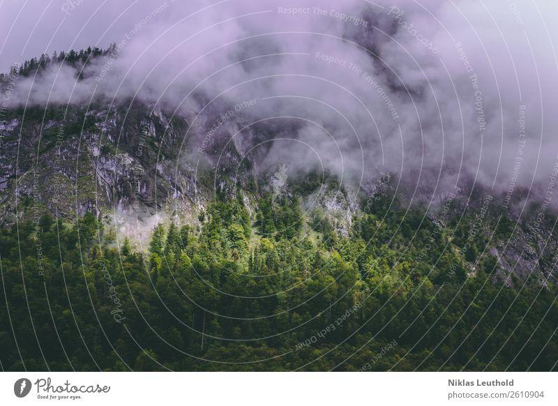 Sonnenfleck Ferien & Urlaub & Reisen Berge u. Gebirge wandern Natur Landschaft Wolken Sonnenlicht Herbst Wetter schlechtes Wetter Nebel Baum Grünpflanze Wald