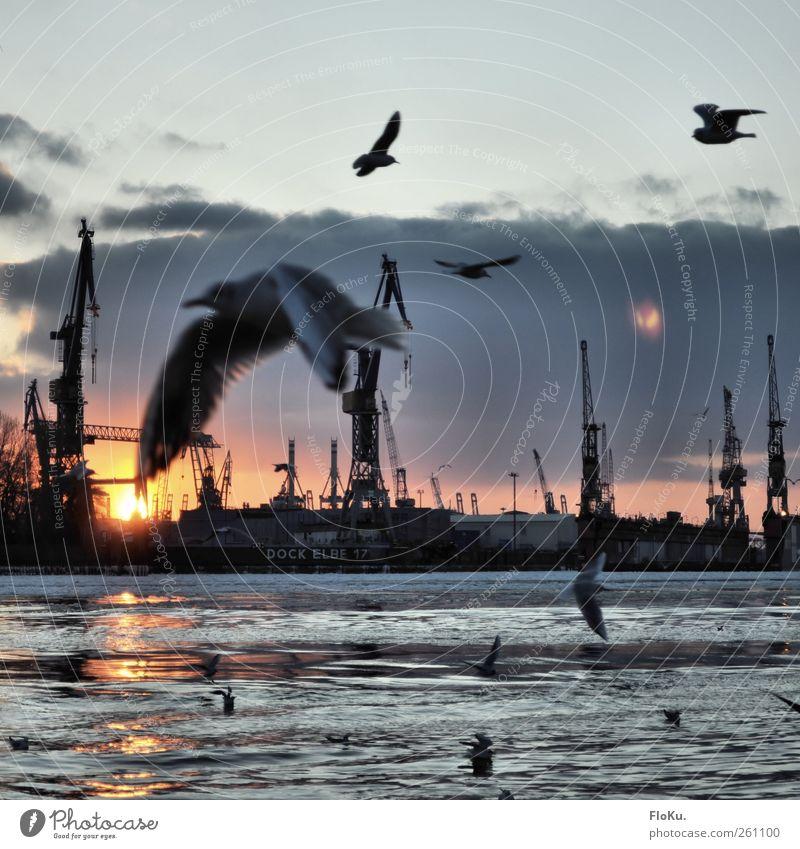 apropos Möwe... Wasser Stadt Winter Vogel fliegen Fröhlichkeit Hamburg Tiergruppe Hafen Schönes Wetter Schifffahrt Möwe blenden Wasseroberfläche Elbe Schwarm