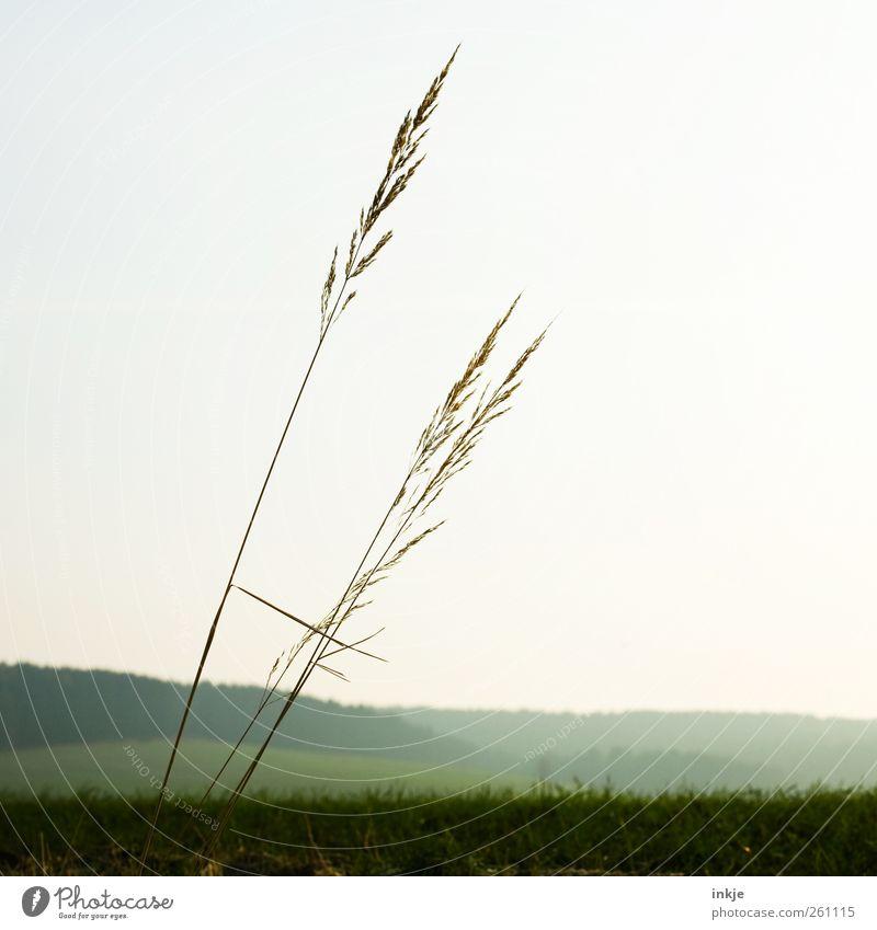 Gullivers Reisen III Umwelt Natur Landschaft Pflanze Wolkenloser Himmel Horizont Frühling Sommer Herbst Winter Klima Wetter Schönes Wetter Gras Wiese Feld Wald