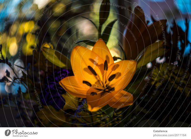 Blumenstrauß mit Lilie Natur Pflanze Blatt Blüte Lilien Blühend schön blau gelb grün violett orange Stimmung Freundschaft Liebe Verliebtheit Duft Farbe