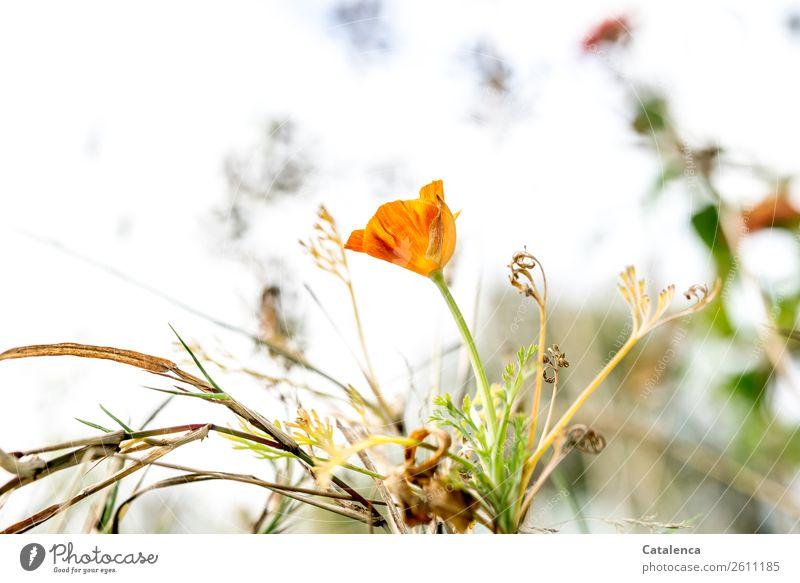 Verblühen Himmel Natur Pflanze schön grün Blume Blatt Herbst Blüte Wiese Gras Garten orange braun Stimmung Blühend