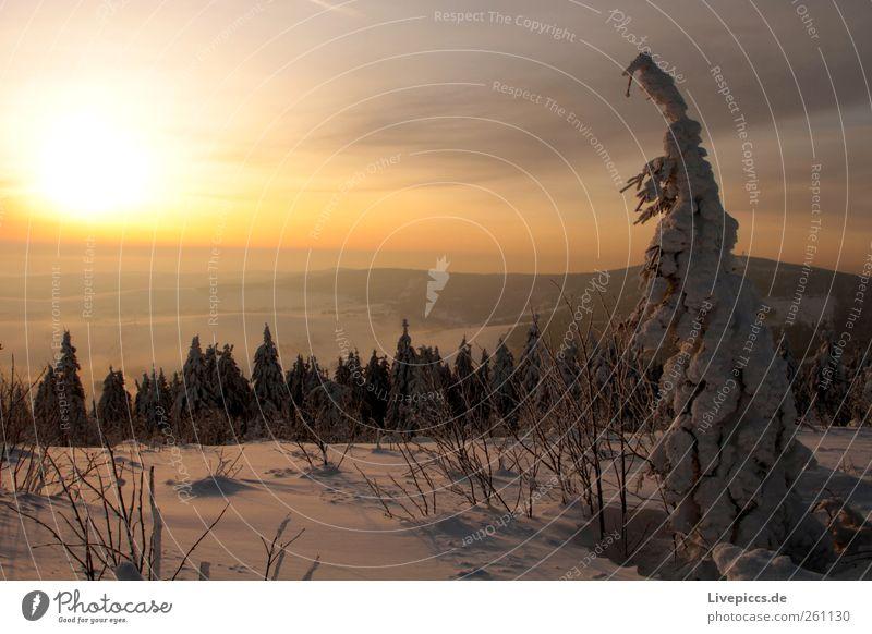 Othal`s finest 3 Natur Baum Ferien & Urlaub & Reisen Pflanze Sonne Winter schwarz gelb Landschaft Schnee Berge u. Gebirge grau Schneefall gold Ausflug Abenteuer