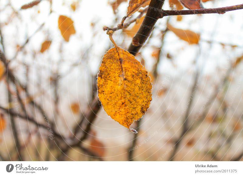 Das letzte Blatt Natur Pflanze Baum Erholung Einsamkeit Winter Herbst gelb Traurigkeit orange Design Zufriedenheit Vergänglichkeit einzeln Wandel & Veränderung