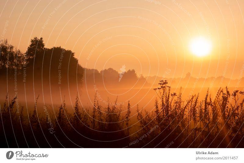 Mystischer Sonnenaufgang Ferien & Urlaub & Reisen Pflanze Landschaft Baum Erholung Blatt Herbst Innenarchitektur Deutschland orange Design Zufriedenheit