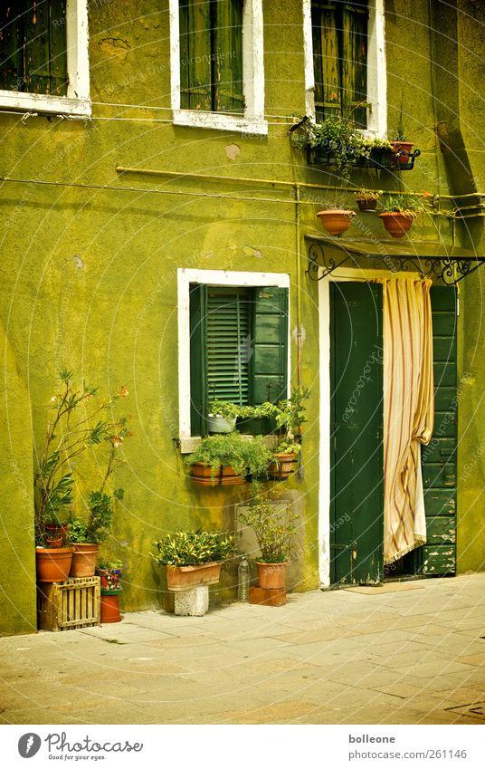 Burano ist grün Ferien & Urlaub & Reisen Sommer Haus Fenster Wand Mauer Tür Fassade Ausflug Tourismus Fröhlichkeit Häusliches Leben Italien Venedig Altstadt
