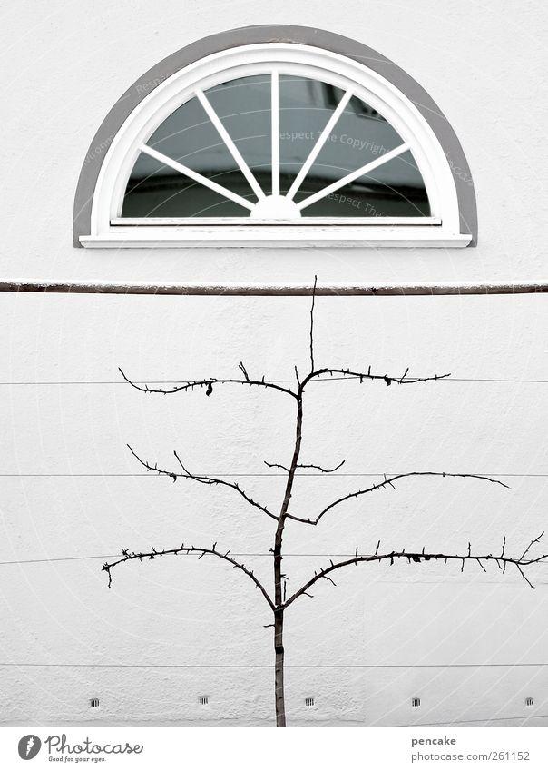 restauration kalt Fenster Wand Architektur Mauer Gebäude Fassade Ordnung Europa Bundesadler Burg oder Schloss Kontrolle geduldig Präzision Kleinstadt Selbstbeherrschung