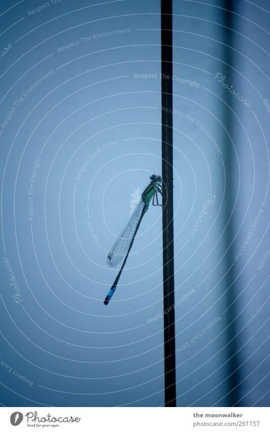ein flügelschlag Flügel Libelle dünn einzigartig kalt Nahaufnahme