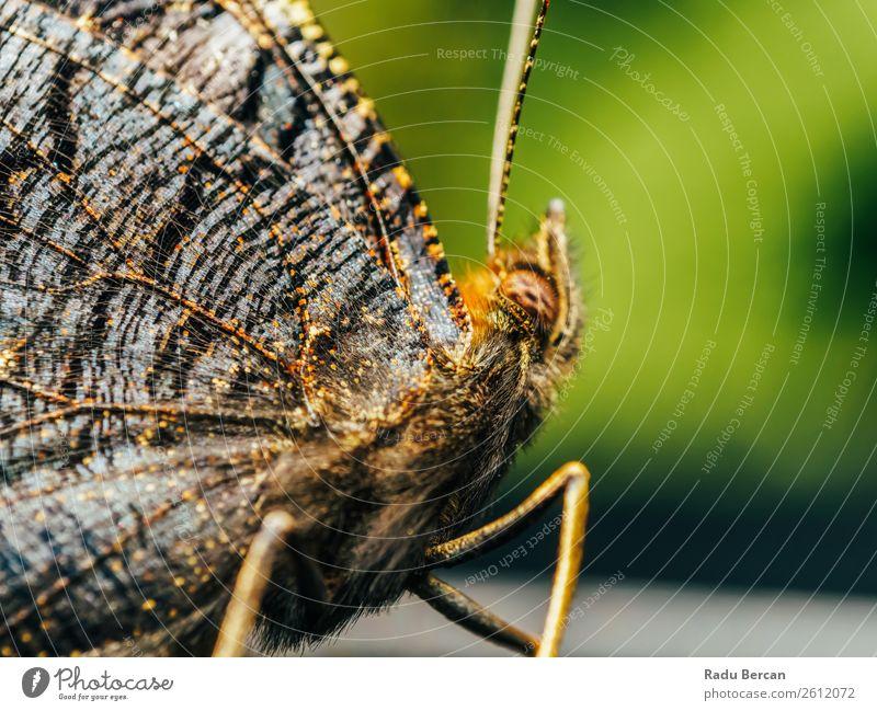 Natur Sommer Farbe schön grün Tier Wald gelb Umwelt natürlich Garten braun wild Wildtier Flügel Insekt