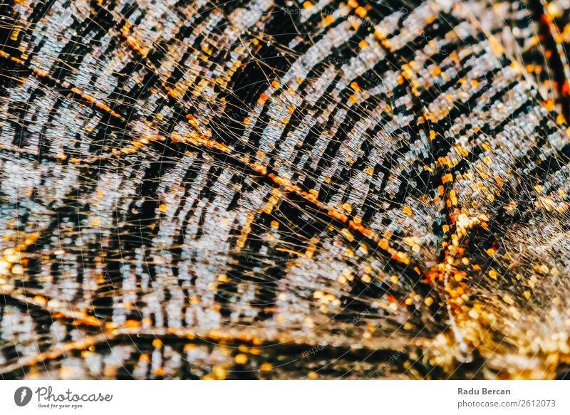 Monarch Schmetterlingsflügel Abstraktes Muster Nahaufnahme Stil Design exotisch schön Sommer Dekoration & Verzierung Umwelt Natur Tier Wildtier Flügel 1 elegant