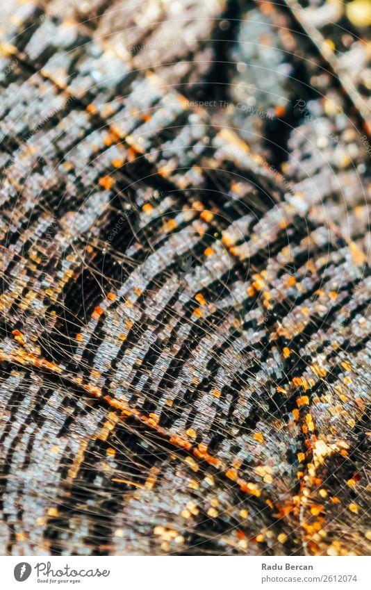 Natur Sommer Farbe schön Tier schwarz Umwelt natürlich außergewöhnlich orange braun Design hell wild Dekoration & Verzierung Wildtier