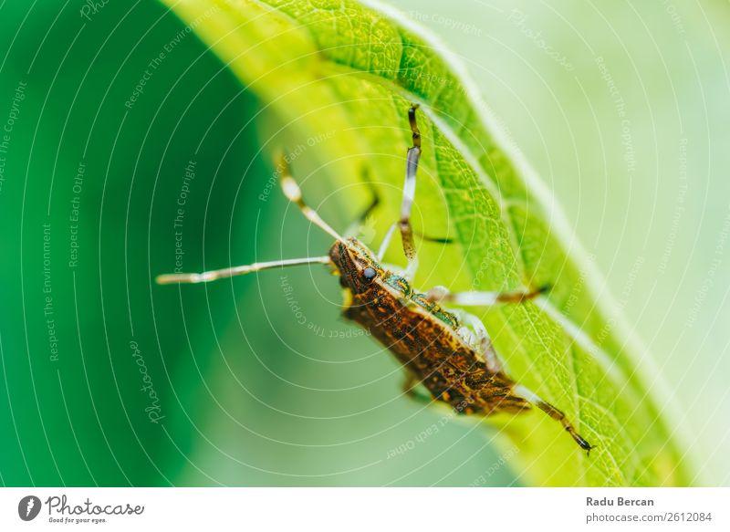 Schild Käfer Makro im Garten Sommer Umwelt Natur Pflanze Tier Blatt Park Wildtier Tiergesicht 1 entdecken füttern krabbeln einfach gruselig klein natürlich wild