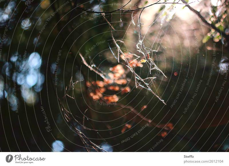 Tiefer im Wald Umwelt Natur Herbst Klimawandel Pflanze Baum Blatt Zweig Zweige u. Äste Ast Herbstlaub Herbstwald dunkel gruselig braun grau orange Stimmung