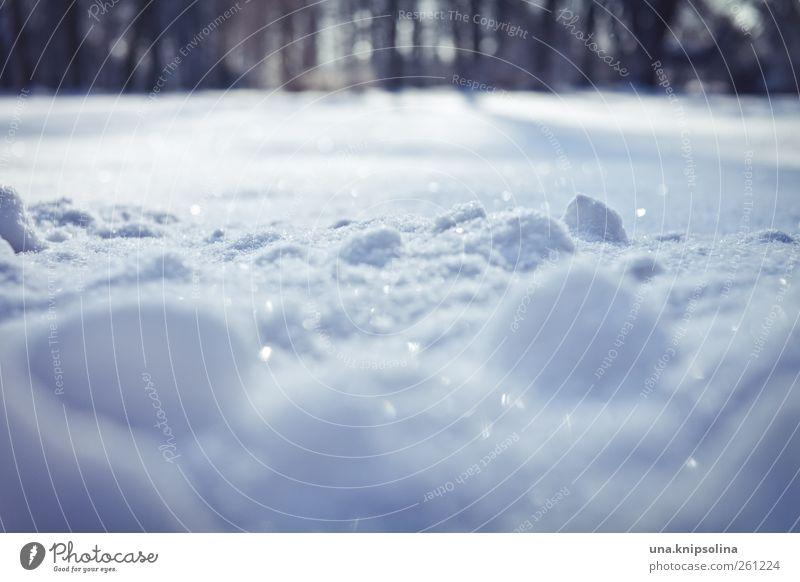 gezuckert Natur weiß Winter Umwelt Wiese kalt Schnee Park Wetter Eis glänzend natürlich leuchten Frost Schönes Wetter Schneelandschaft