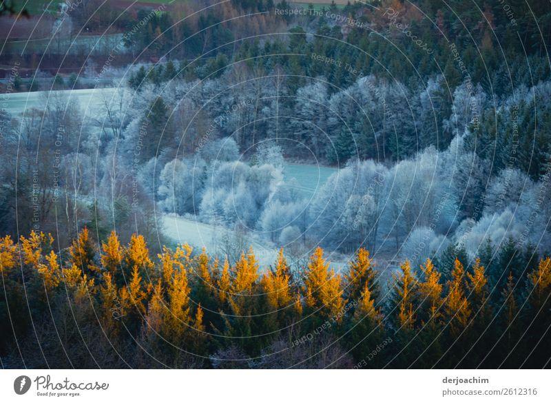 Winter von seiner schönsten Seite Freude harmonisch Wohlgefühl Zufriedenheit Sinnesorgane Natur Schönes Wetter Baum Wald Bayern Deutschland Menschenleer Holz