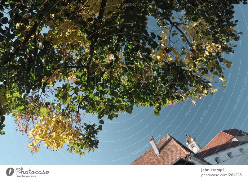 Wo da Haus da Baum küsst alt blau grün Blatt Umwelt Wand Architektur Gebäude Mauer Garten Park Hilfsbereitschaft Dach Schutz
