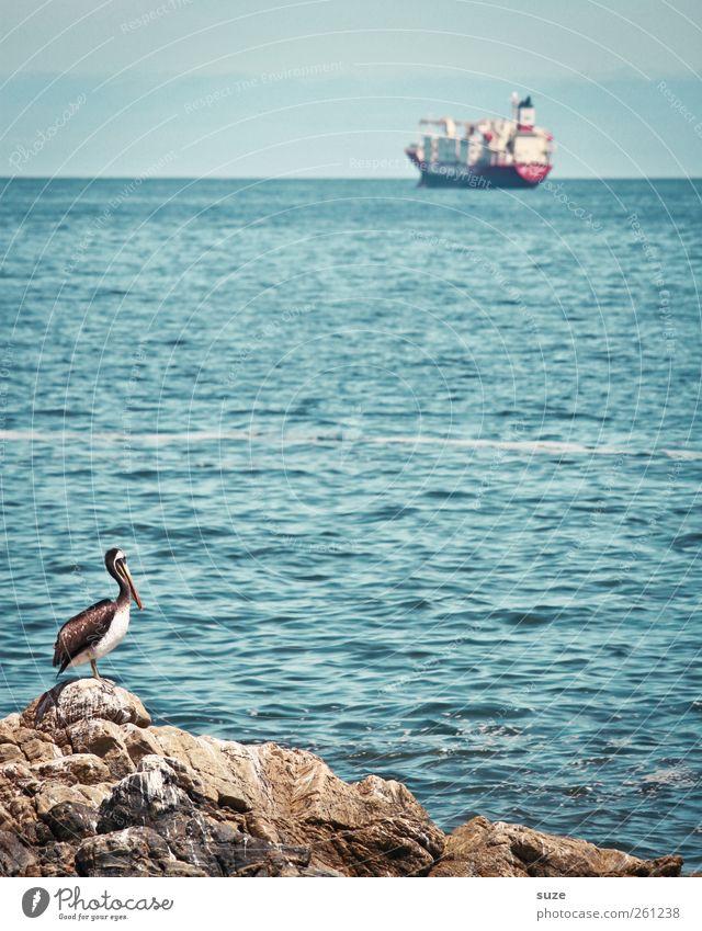 Viña del Mar Industrie Umwelt Natur Landschaft Tier Urelemente Wasser Himmel Horizont Schönes Wetter Felsen Küste Meer Containerschiff Öltanker Wasserfahrzeug
