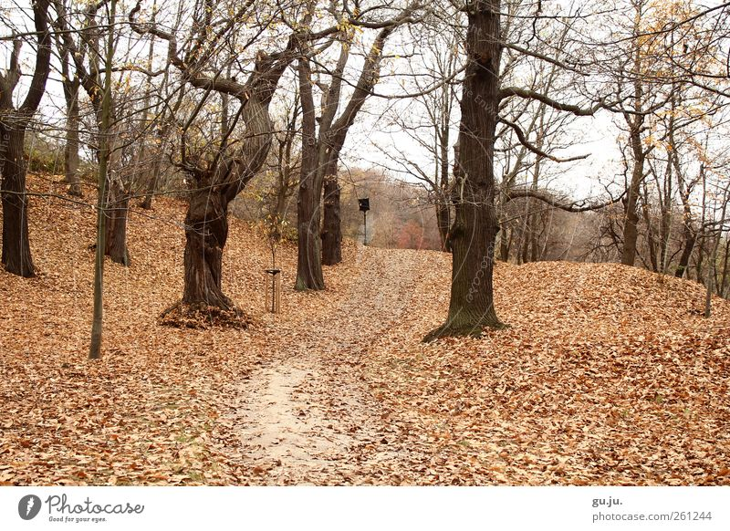 Kastanienwäldchen Natur Landschaft Herbst Baum Blatt Park Wald Hügel Wege & Pfade alt braun weiß leer Laubbaum Laubwald Ast Kastanienbaum Farbfoto Außenaufnahme