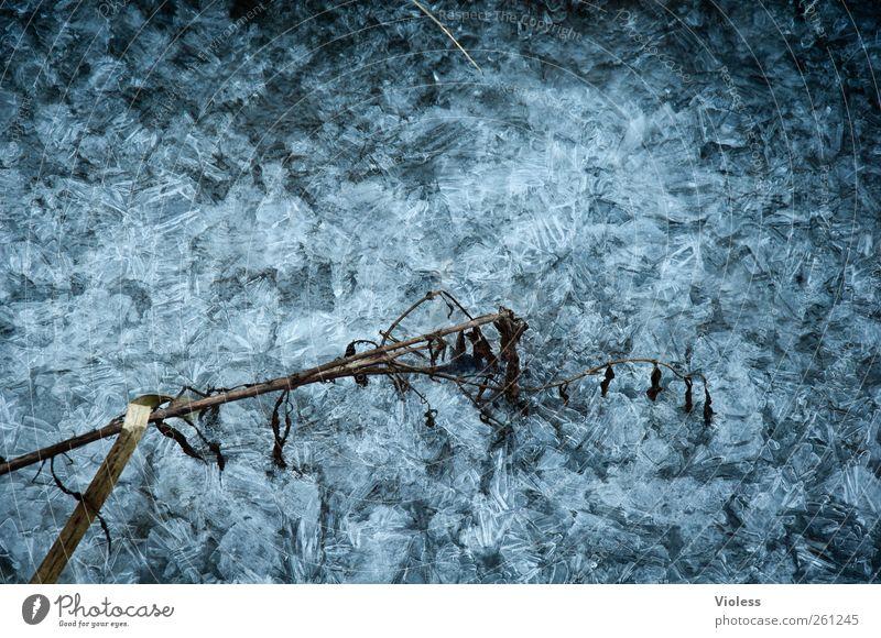 Eisig blau kalt Eis Frost gefroren frieren Kristalle