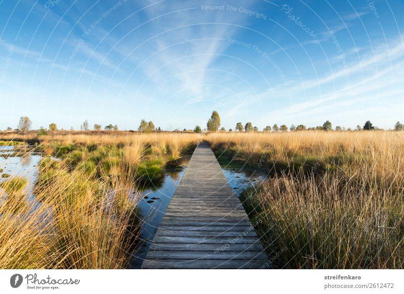 Morgens im Hohen Venn Umwelt Natur Landschaft Pflanze Urelemente Luft Wasser Himmel Wolken Herbst Schönes Wetter Baum Gras Sträucher Moos Moor Sumpf Teich Holz