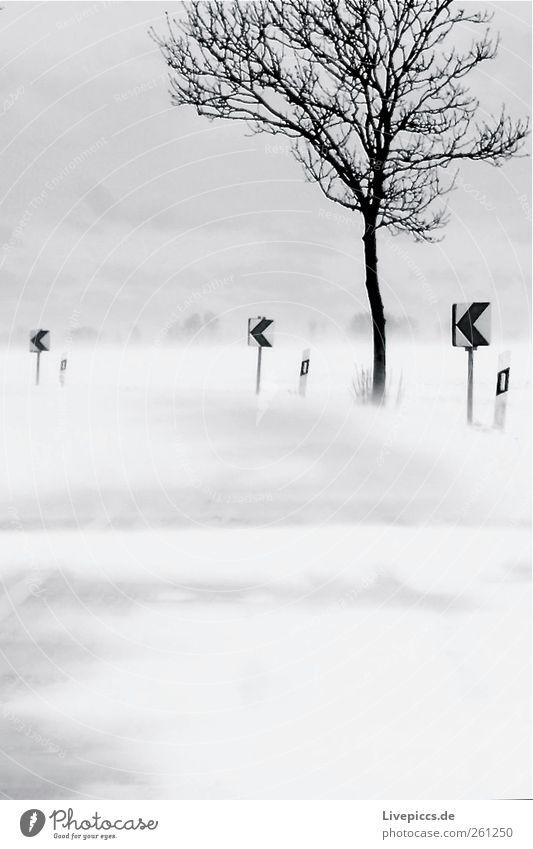 linksrum Umwelt Natur Winter schlechtes Wetter Wind Sturm Schnee Schneefall Baum Verkehr Straße Schutzschild grau schwarz weiß Schneesturm Schwarzweißfoto